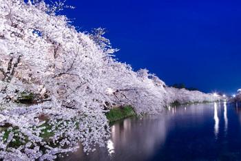弘前公園西堀の桜.jpg